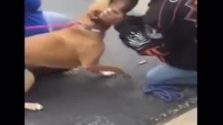Dog and Best Friend - Video