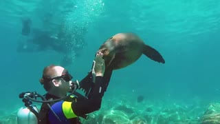 Sea Lion playfully attacks diver
