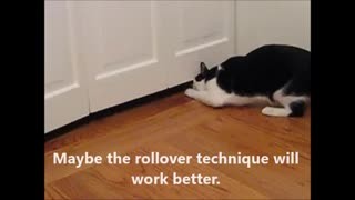 Cat Techniques For Opening a Closet  - Video