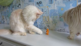 Toys for cats. - Video
