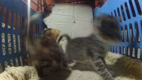 Gopro in a lair of kittens