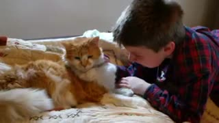 Incredible reunion of boy and missing 11-year-old cat - Video