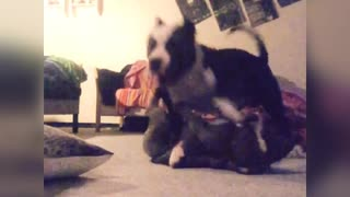 Dogs play time - Video