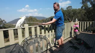 Family Hand Feed Wild Australian Parrots On Balcony