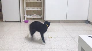 Karate cat goes into action - Video
