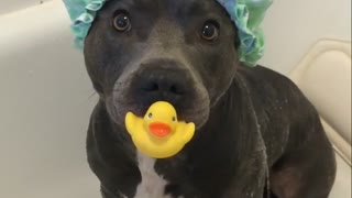 Puppy is totally ready for shower time - Video