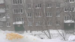 Winter sparrows eating