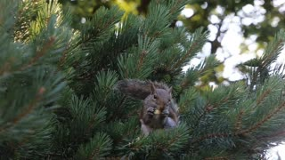 Squirrels one of the most famous animals for children
