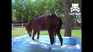 Horse Has the Time of His Life While Splashing in a Kiddie Pool - Video