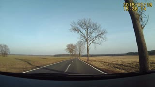 We Can't Seem To Understand Why The Deer Crossed The Road  - Video