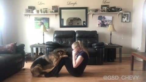 German Shepherd thinks she's a personal trainer
