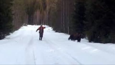 "Scared ""Swedish Man"" Repels ""Attacking Bear"" Back Into The Woods"