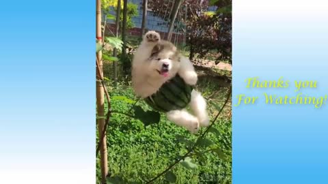 Lovly Pets And Funny Animals Compilation