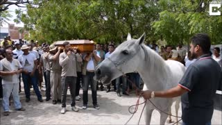 Grieving Horse Breaks Down On Camera When He Smells His Former Human's Casket - Video