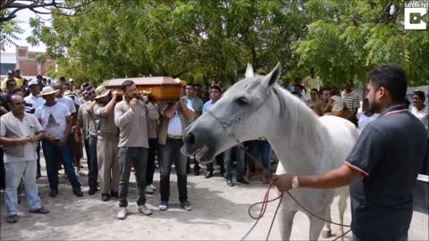 Grieving Horse Breaks Down On Camera When He Smells His Former Owner's Casket