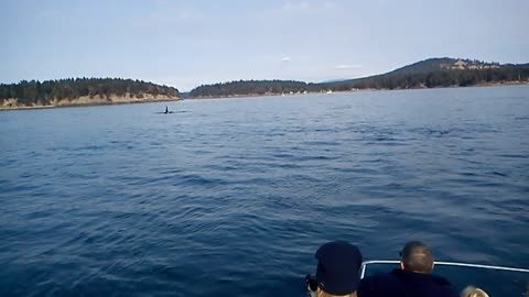 Killer Whales spotted off San Juan Islands
