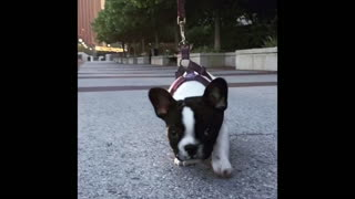 Puppy Dog Slow Motion Compilation - Video