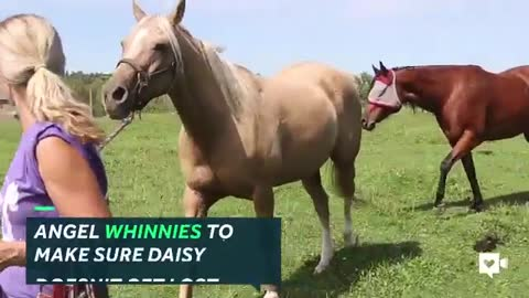 Horse Leads Her Blind Friend So She Can Be Mobile
