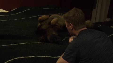 Creepy bedtime song puts puppy to sleep