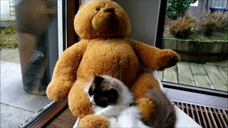 Cat and teddy bear relax on hammock