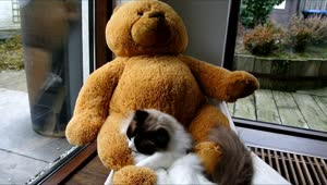 Cat and teddy bear relax on hammock - Video