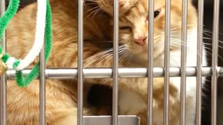 Two Sister Cats Hugging Each Other At The Animal Shelter - Video