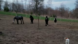 Friesdale horses super happy for dinner time - Video