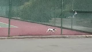 Hilarious tennis tournament fails compilation - Video