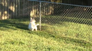 Close Encounter of the Possum Kind - Video