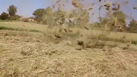 Whirlwind passing over hay field resembles mini tornado