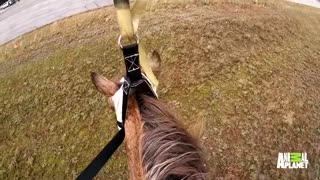 The dramatic rescue of Lucky the horse - Video