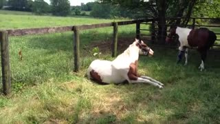 Horse Born With Deformed Leg Saved By Professionals! - Video