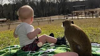 Olive and Bobo See Neighbors During Picnic