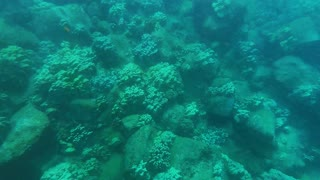 Snorkeling at Koloa Landing on Kauai Hawaii - Video