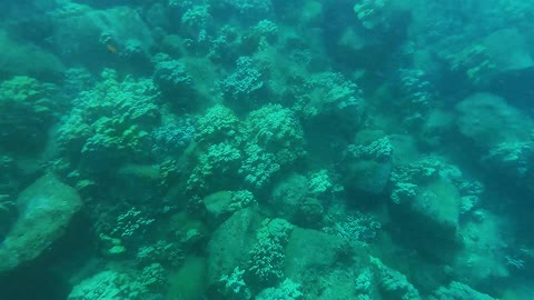 Snorkeling at Koloa Landing on Kauai Hawaii