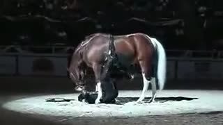 Man straddles horse during rip-roaring comedy routine that leaves crowd howling - Video