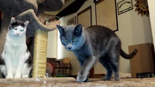 Cats Playing With Bubbles - Video