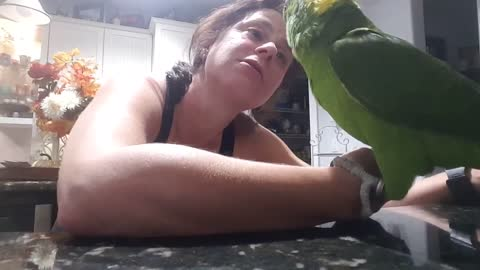 Cody the parrot loves his aunt lainey and she loves him right back
