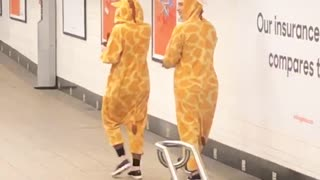 Two people dressed in giraffe costumes