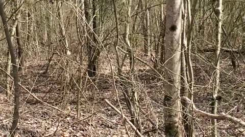 Just walking in the woods 3