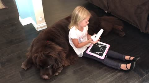 Giant dog acts as personal sofa for little girl