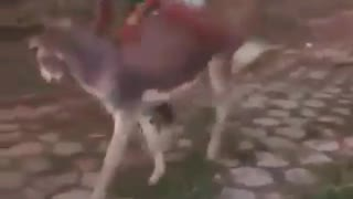 A Funny Donkey Riding  - Video