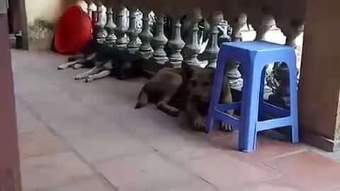 The expression of the two dogs before the sound of the surrounding