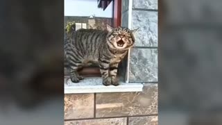 Cats Talking || They are so Adorable