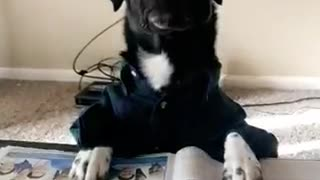 Black dog reading the newspaper with glasses on