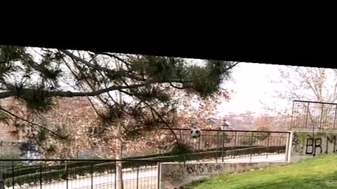 Brown dog gets ball from tree branch