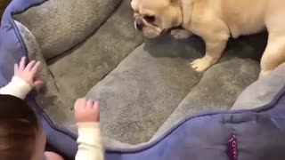 little babies play with dog
