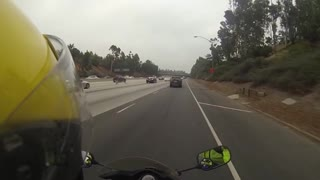 Duck Flying on Freeway - Video