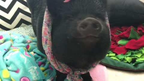 Mamma Pig ready to hit the town