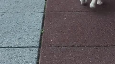 Puppy in slow motion